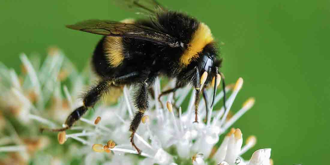 Micro-Chipped Bees to Plot Movements – Prevents Food Deprivation