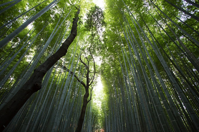 nature-forest-trees-bamboo