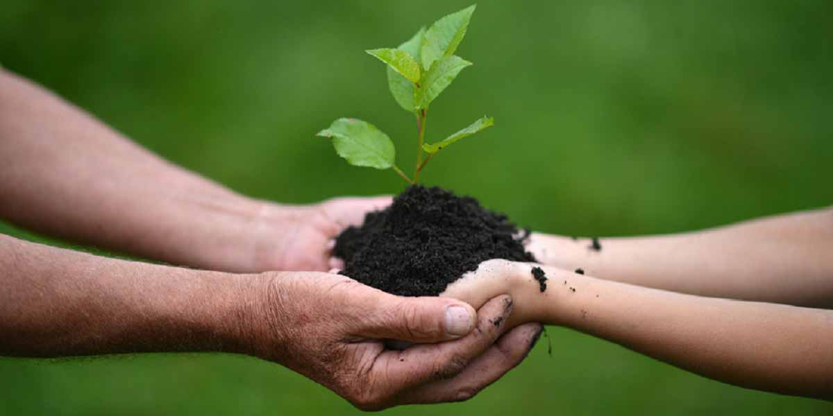 hands holding soil and seedling