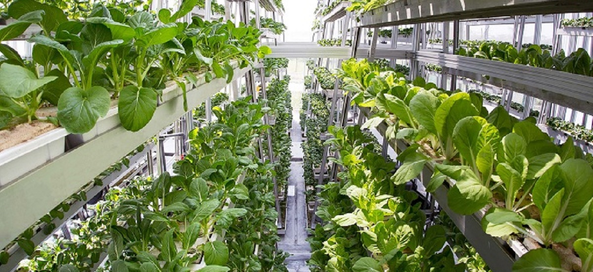 "Growing Food ""Upwards"": More Effective than Regular Farming"