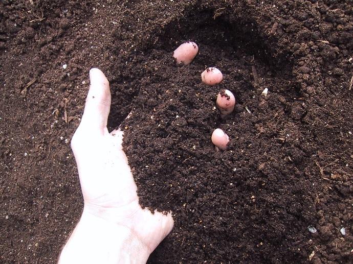 Organic Gardening and Organic Soil 02