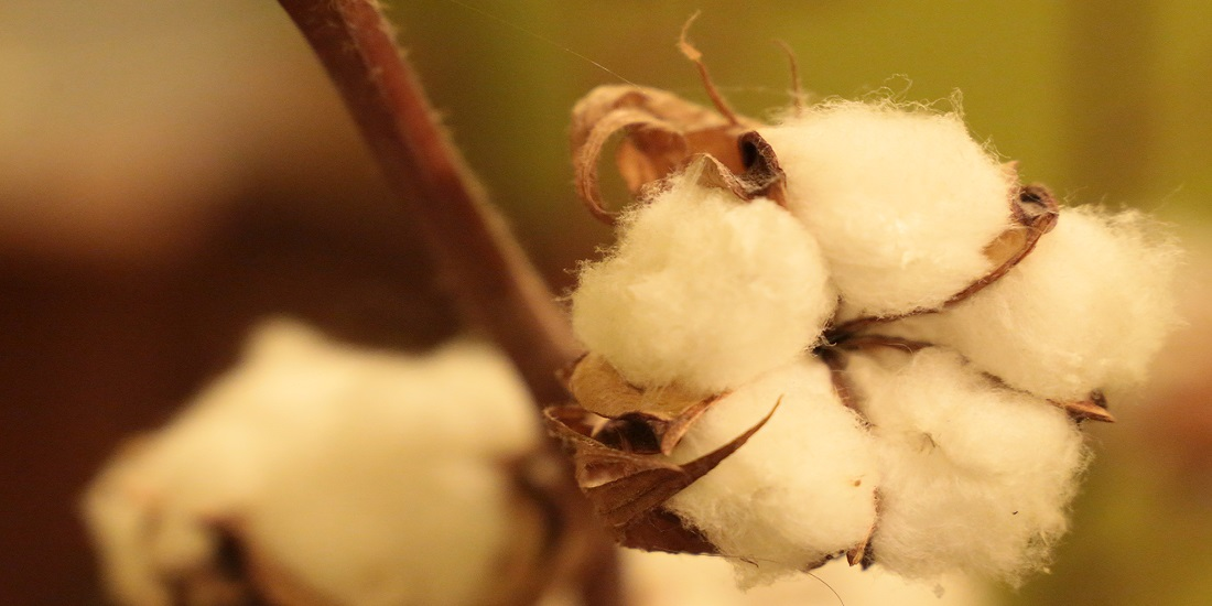 Primark Extends Cotton Connect Programme to Support 10,000 Farmers in India