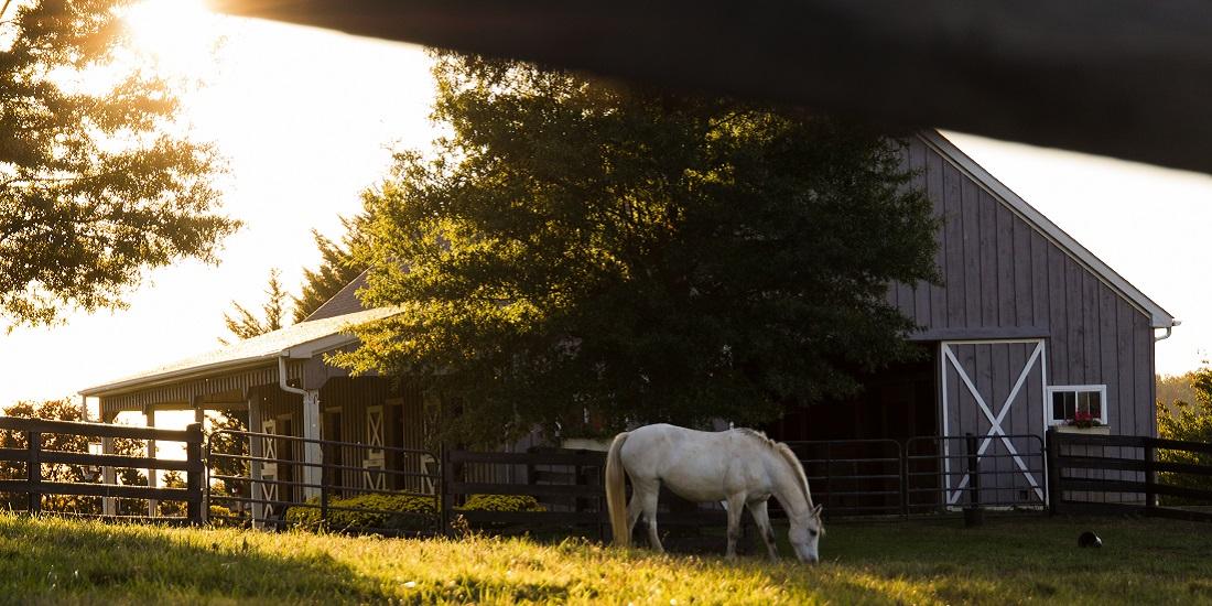 Study Reveals Social Motivations of Urban Farms
