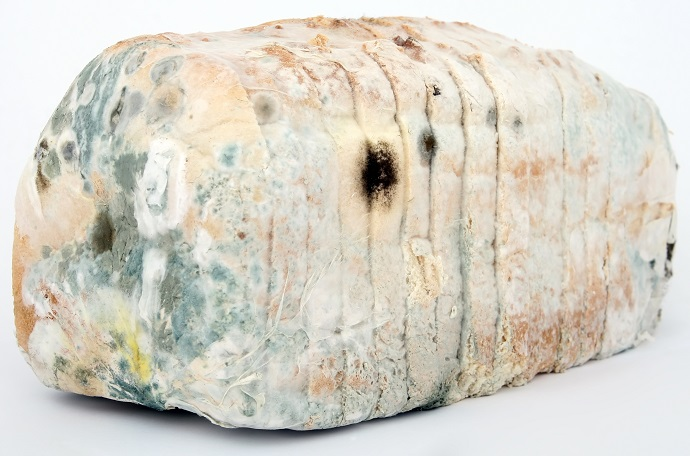Why Moldy Bread could be the Future for Rechargeable Batteries 03