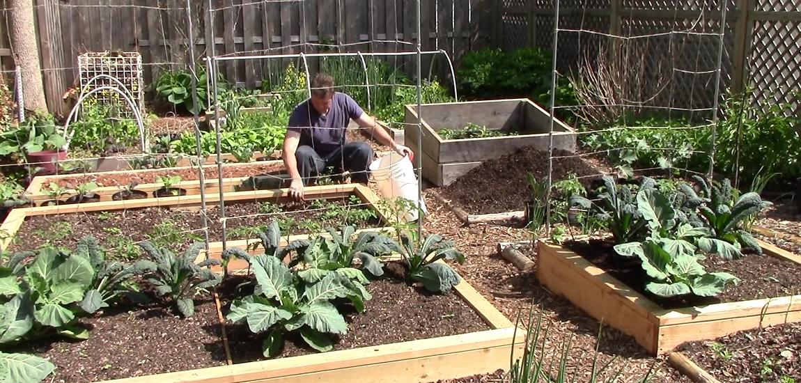Tips To Grow A Lot Of Food In A Small Garden