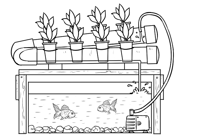 Hydroponics and Aquaponics - The Better System 02