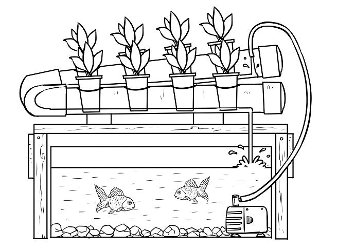 Hydroponics and Aquaponics - The Better System 02