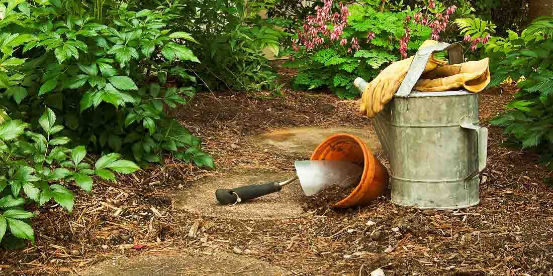 Mulching – The Chop and Drop