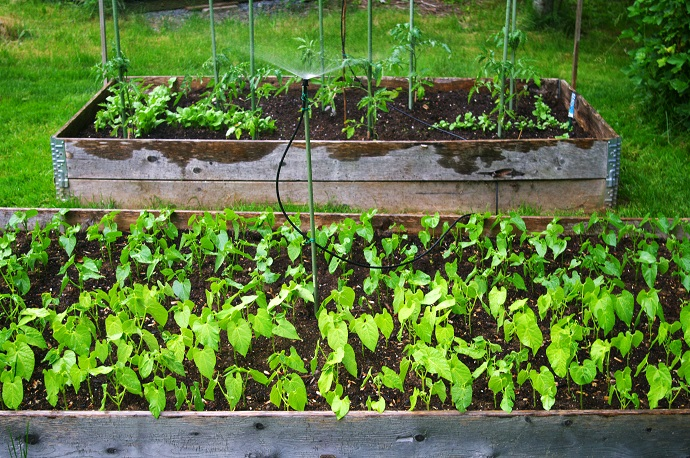 Watering an Urban Garden