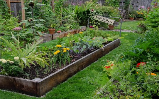 Raised Garden Beds For Better Backyard Crops