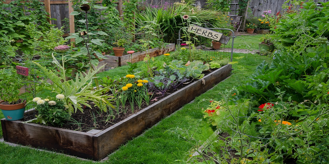 Raised Garden Beds For Better Backyard Crops