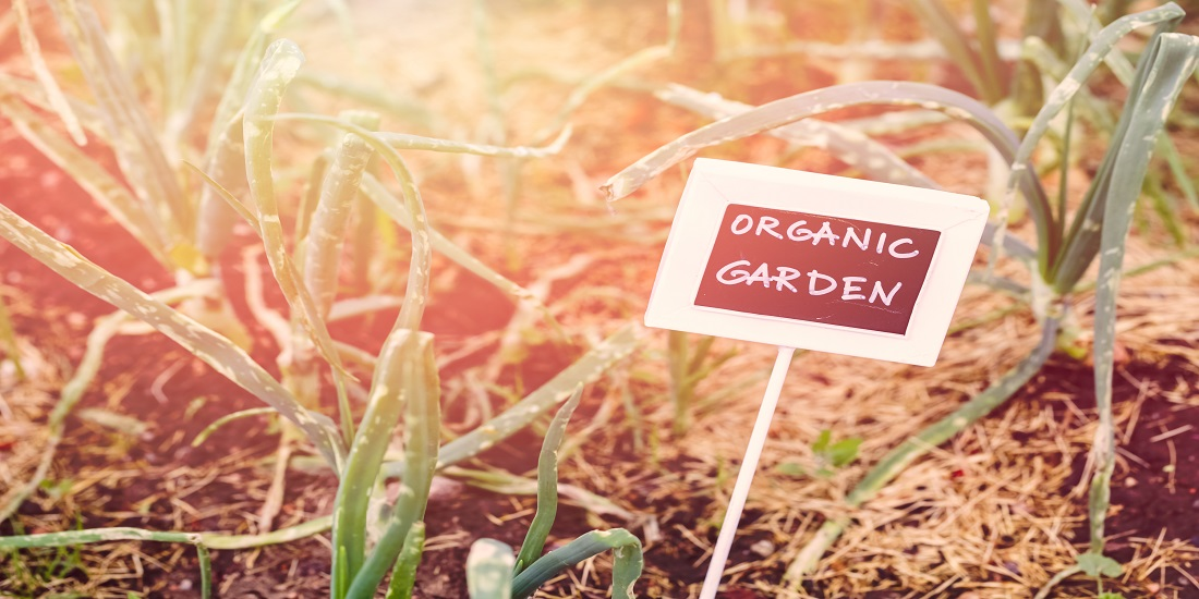 Public Edible Parks: Your Community's Free Food Source
