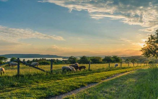 When Space is Abundant: Using Acreage to Generate Income For Your Homestead